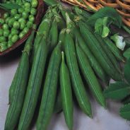 Pea Douce Provence - First early - 100 seeds / 300 seeds